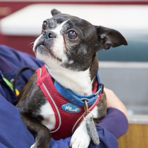 Dog in harness at clinic