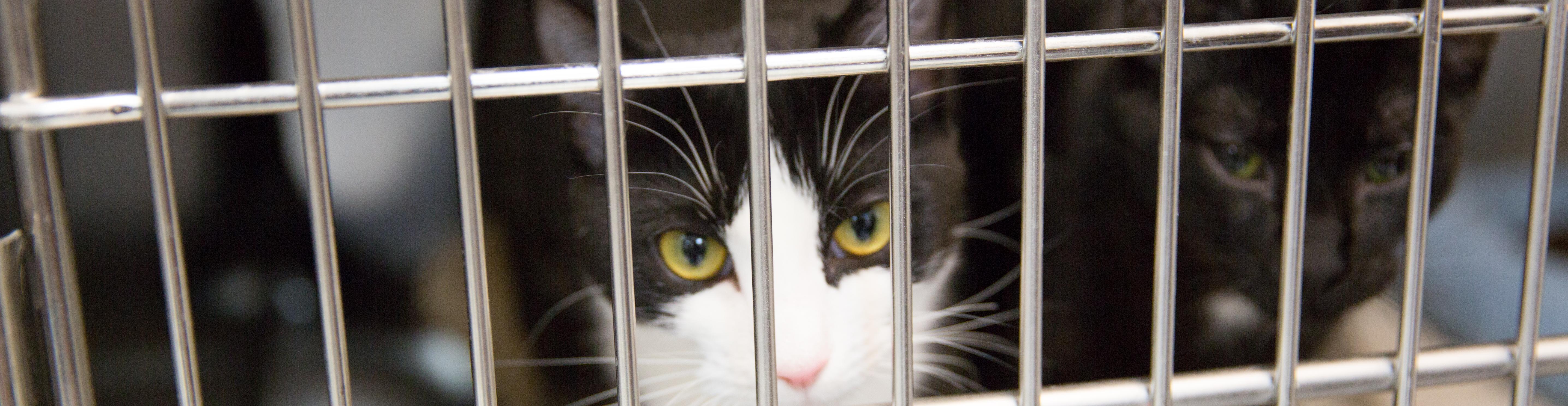 Cat in a boarding kennel