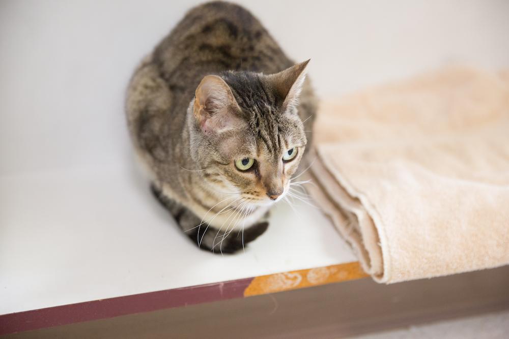 Cat boarding at Cornell Center Animal Hospital