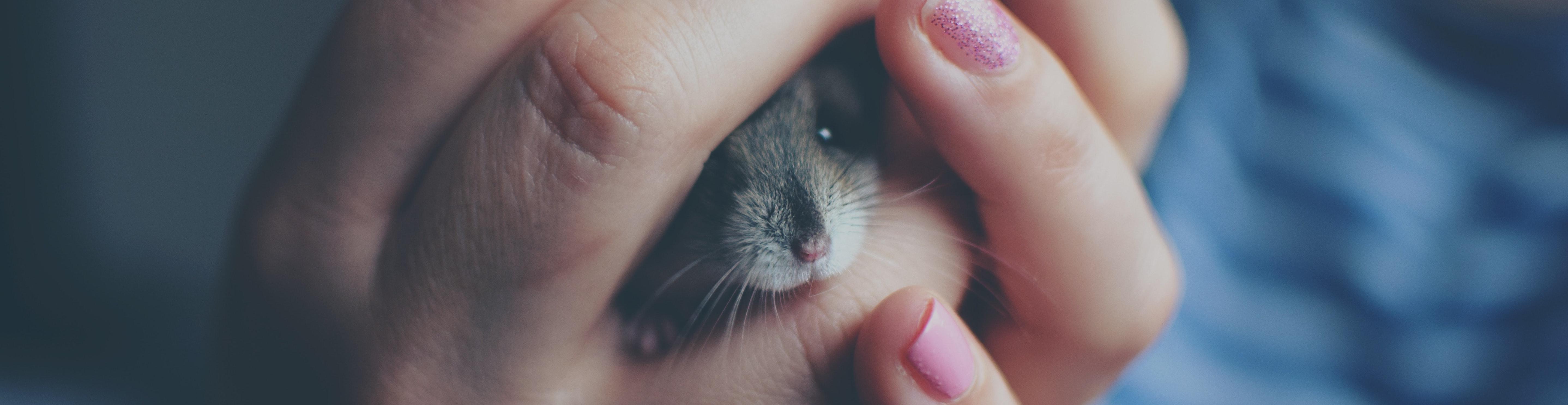 Girl holding hamster in hands