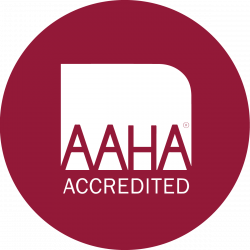 AAHA Accredited icon